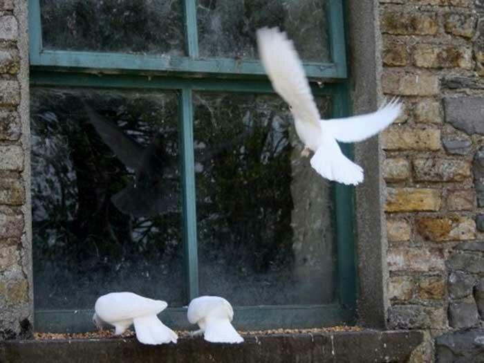 Значение приметы про птицу, которая стучит в окно