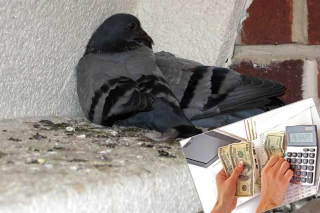 Если птица ударилась в окно и разбилась насмерть: что означает эта примета