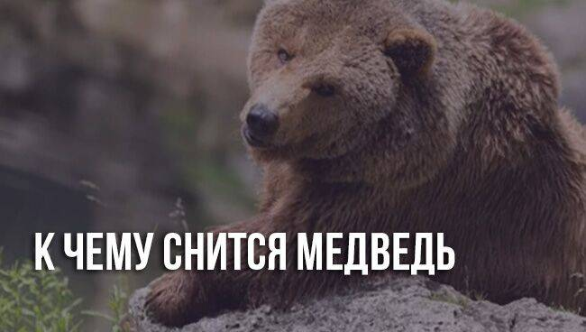 Медведи во сне к чему снятся сонник