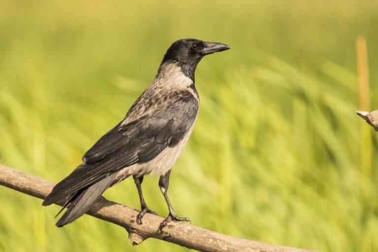 Толкования примет о голубе, врезавшемся в человека и пролетевшем над головой