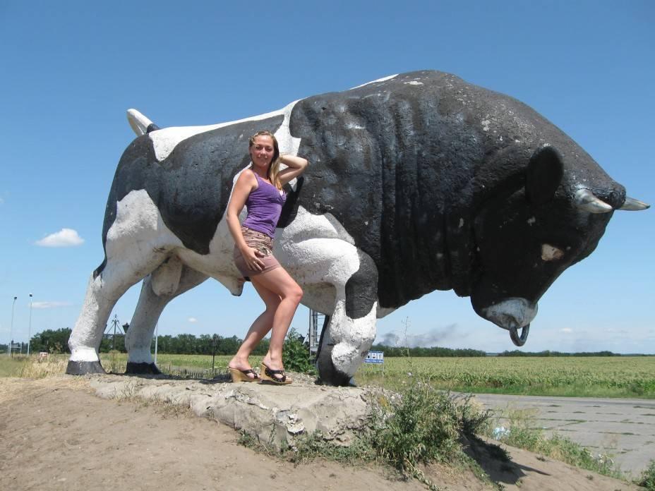 Снится нападающий бык
