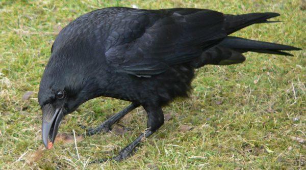 Все народные приметы про птиц