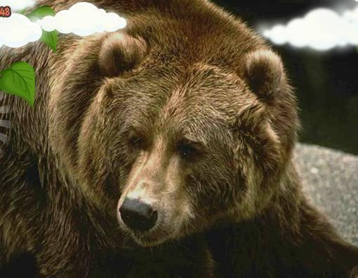 К чему снится медведь женщине или мужчине?