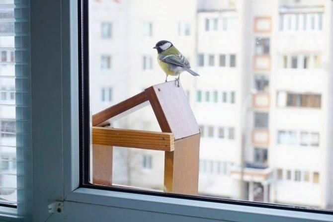 Чего ждать, если в дом через окно залетел голубь
