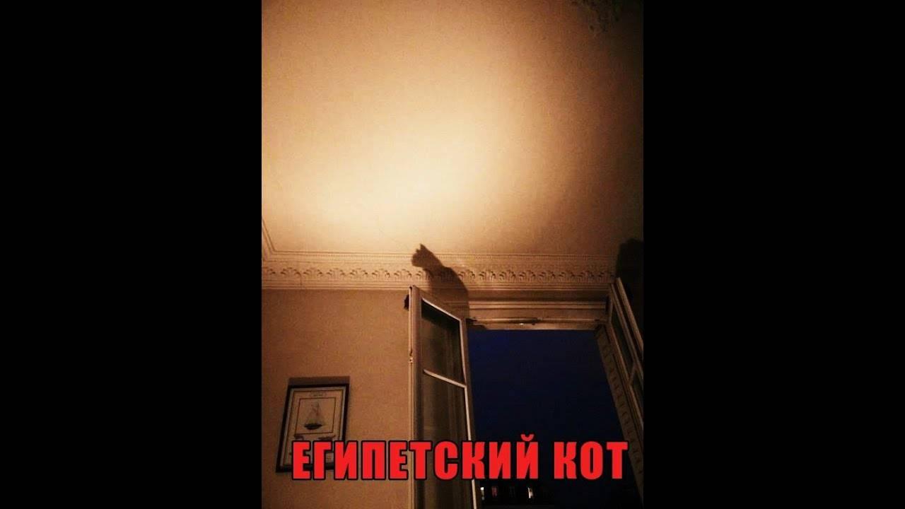 Как вызвать египетского кота исполняющего желания днем | что говорят насекомые