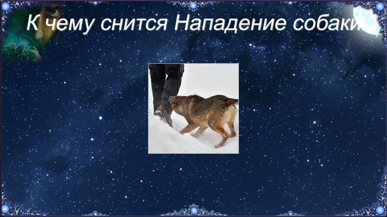 Сонник собака укусила знакомого. к чему снится собака укусила знакомого видеть во сне - сонник дома солнца