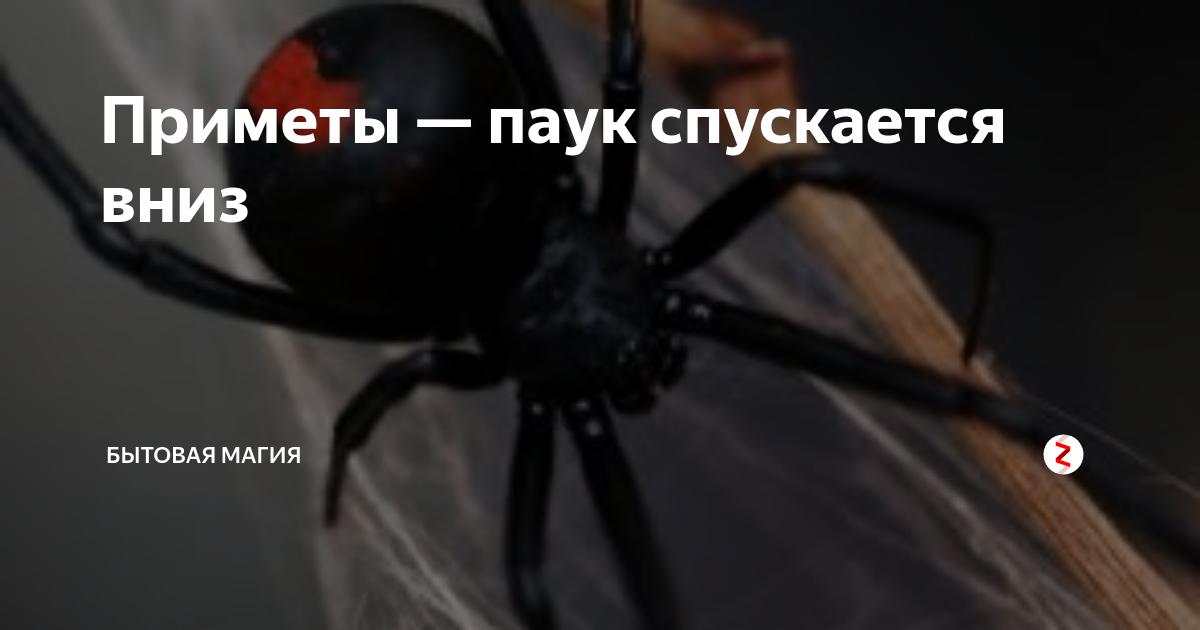 Проверенные приметы: к чему паук ползет вверх