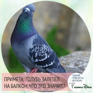 Что предвещает мертвый найденный голубь и как можно избавиться от грядущих невзгод