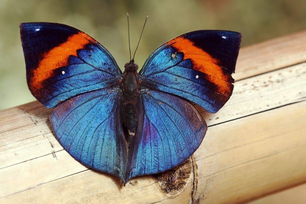 Бабочка залетела в дом - что произойдет