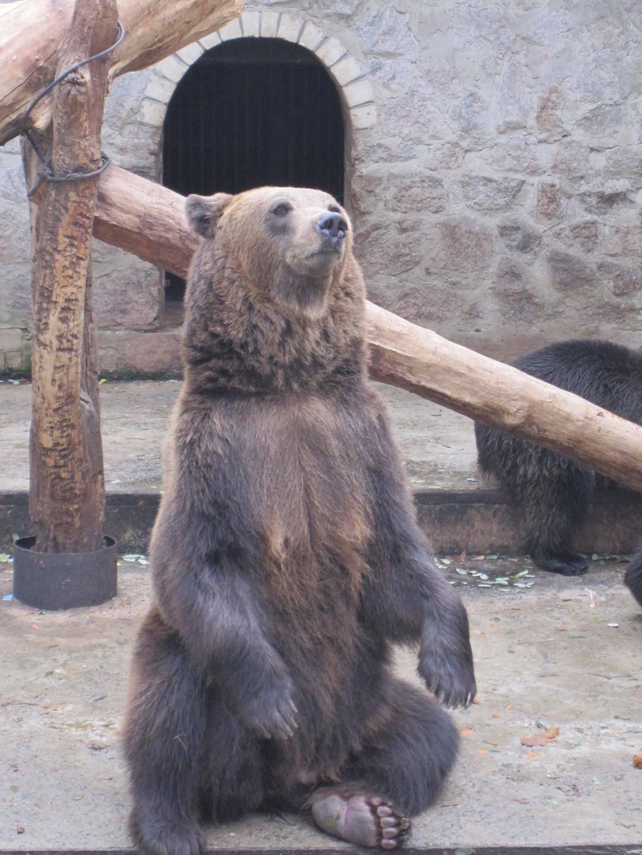 Сонник: медведь