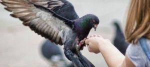 Птица нагадила на голову, плече, одежду - что значит примета