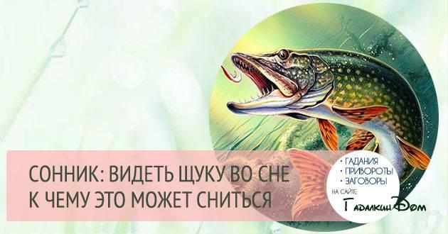 Сонник ловить большую живую рыбу. к чему снится ловить большую живую рыбу видеть во сне - сонник дома солнца