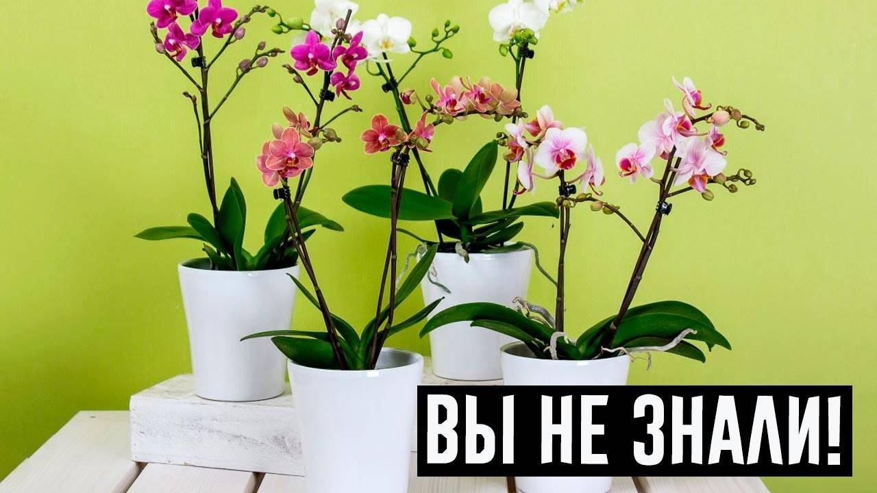 Орхидея в доме – приметы и суеверия