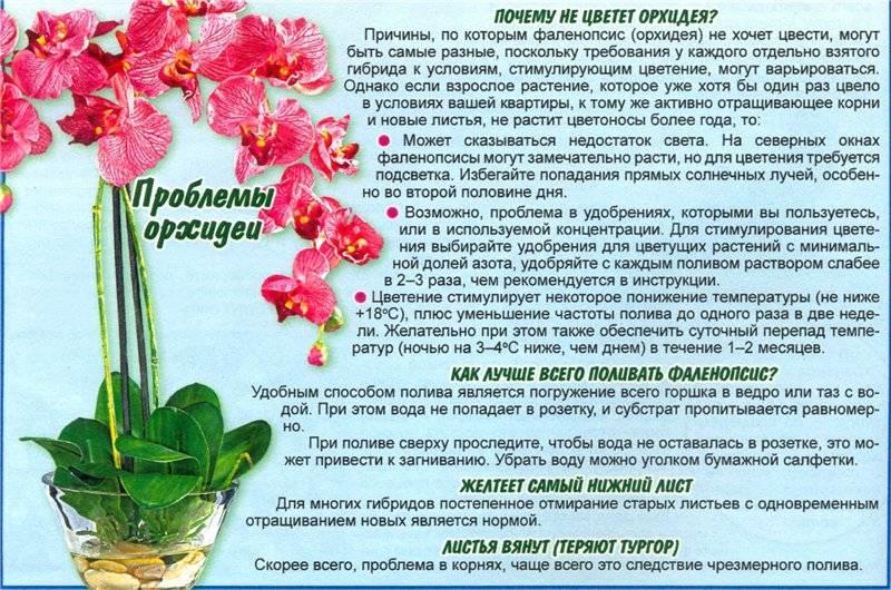 Почему нельзя держать дома орхидеи: плохие и хорошие приметы, влияние на здоровье