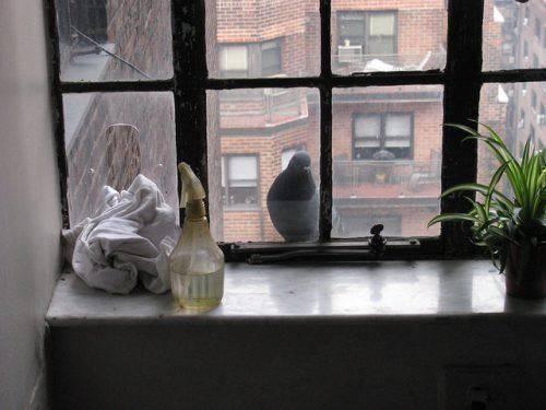 Толкование приметы, если голубь сел на подоконник за окном