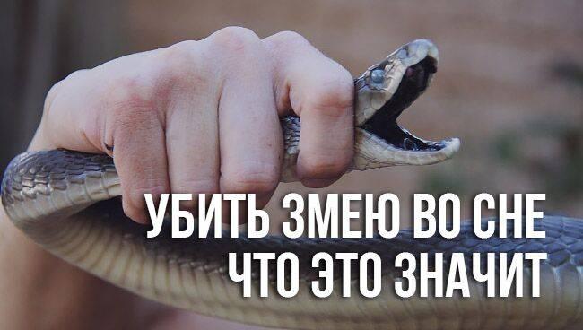 Убить змею во сне — к чему это?