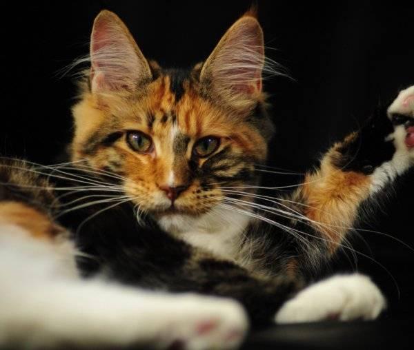 Приметы про кошек в доме