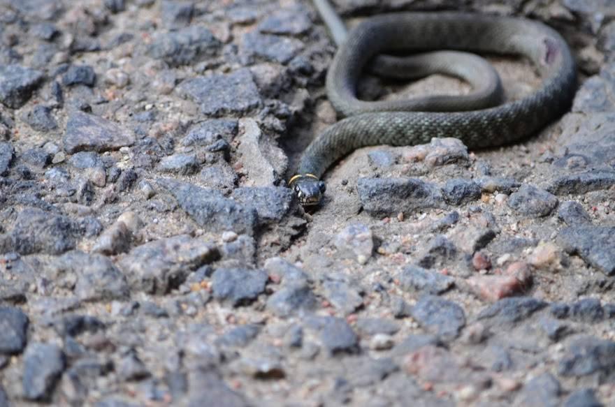 Змея укусила другого