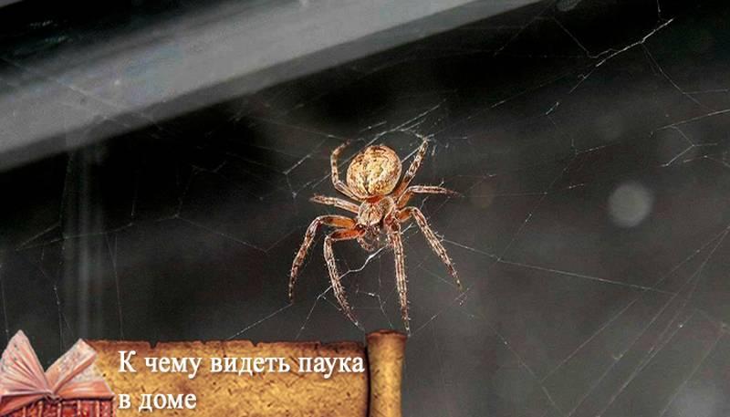 Сонник пауки маленькие. к чему снится пауки маленькие видеть во сне - сонник дома солнца