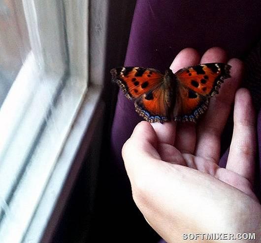 К чему бабочка залетает в дом или квартиру: значение приметы