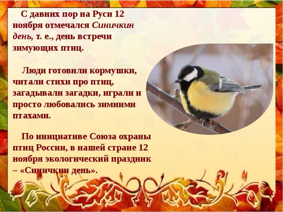 Что означает увидеть мертвую птицу
