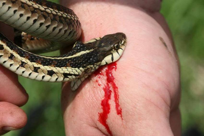 Сонник укусили 3 змеи. к чему снится укусили 3 змеи видеть во сне - сонник дома солнца