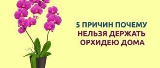 Приметы об орхидее, уход в домашних условиях