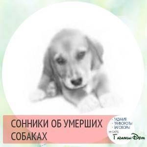 Сонник черно белая собака. к чему снится черно белая собака видеть во сне - сонник дома солнца