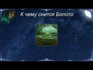 Сонник болото. к чему снится болото во сне женщине и мужчине