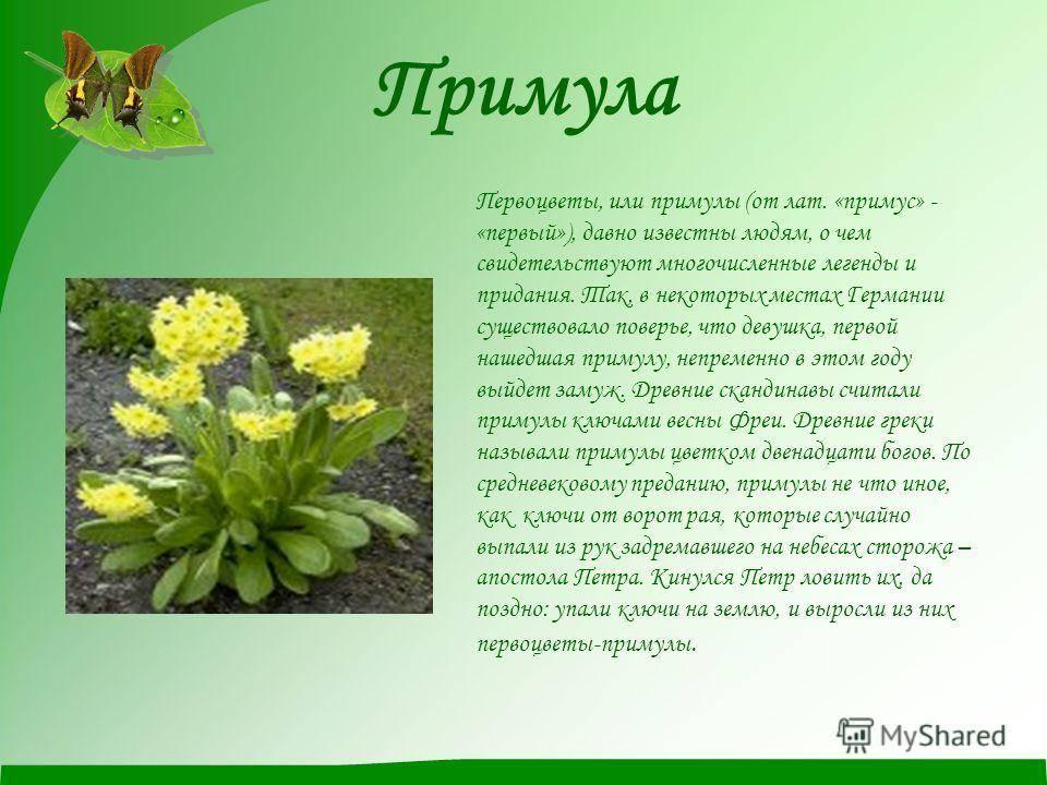 Легенды и поверья о весенних цветах разных стран. старинные поверья о цветах — символах весны