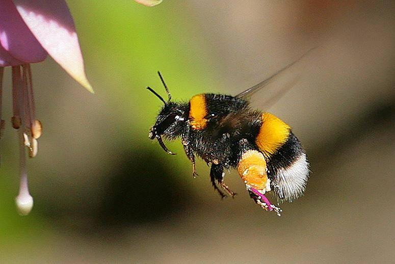 Бабочка, оса, шмель залетел в окно — приметы