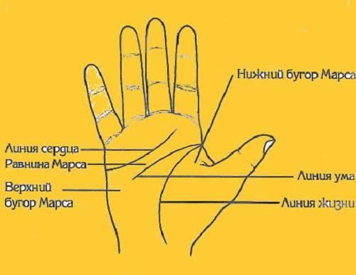 Хиромантия: холмы на руке, названия, значение и толкование символов