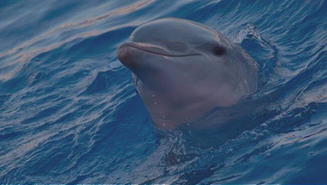 Сонник дельфины. к чему снятся дельфины во сне приснились