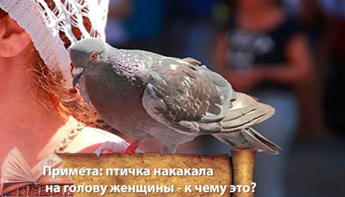 О чем говорят приметы если птица накакала на человека, балкон, машину о чем говорят приметы если птица накакала на человека, балкон, машину