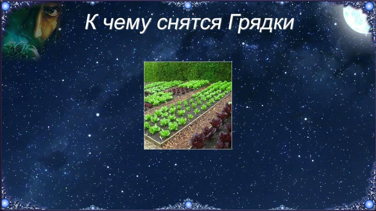Зелень грядки