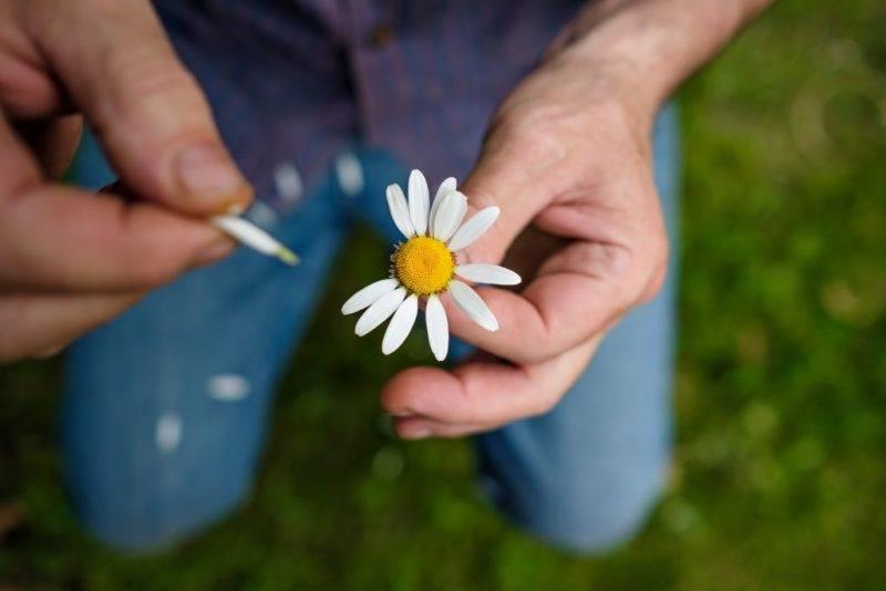 Гадание на ромашке и других цветах