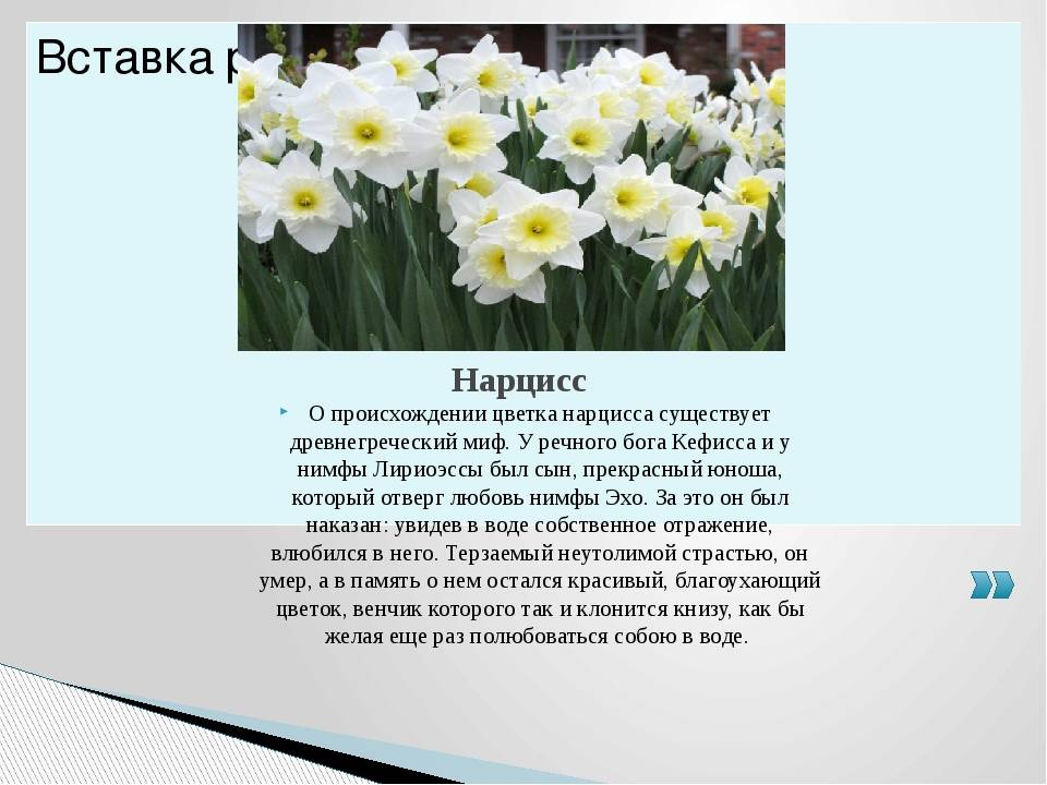 Легенды о весенних цветах