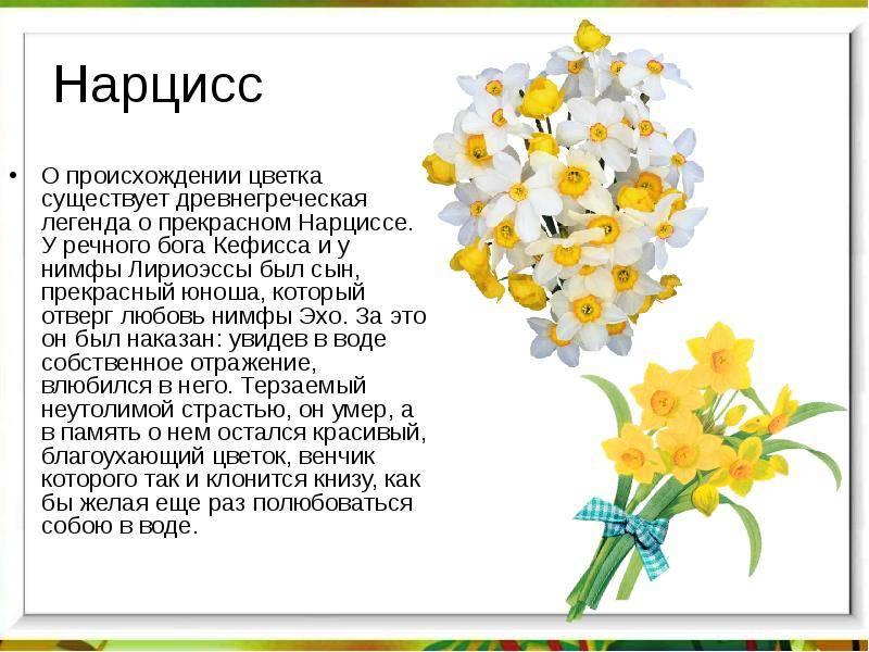 Рассказ про весенние цветы