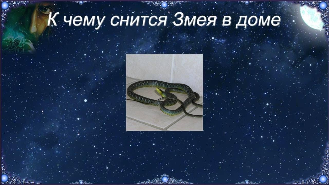 К чему снится змеи?
