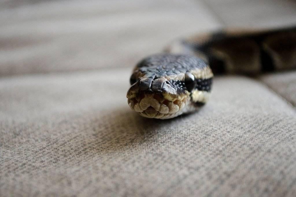 Сонник много много змей. к чему снится много много змей видеть во сне - сонник дома солнца
