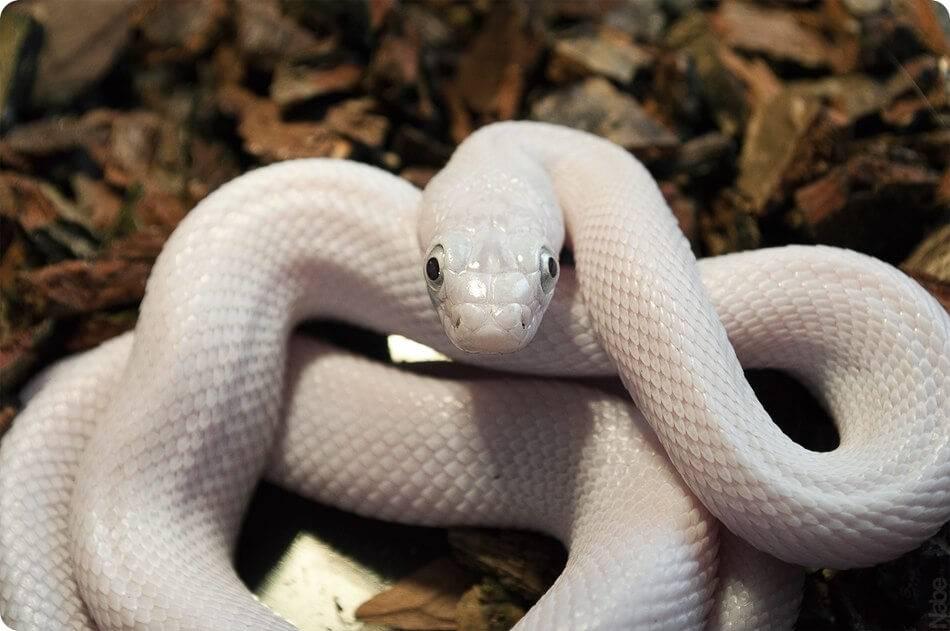 Сонник мужчине приснились змеи. к чему снится мужчине приснились змеи видеть во сне - сонник дома солнца