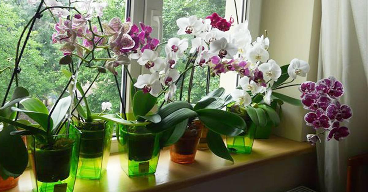 Орхидеи: польза или вред, можно ли держать в доме, приметы и суеверия