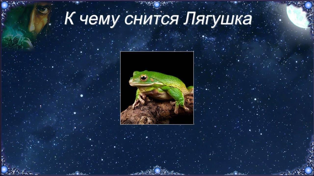 Увидеть лягушку: старинная примета