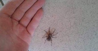 Человек и паук. приметы, связанные с пауками   поздравления! приметы! праздники   яндекс дзен