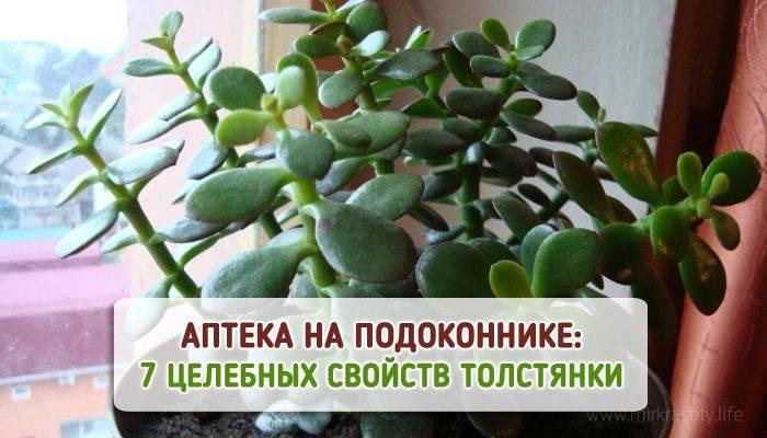 Магические свойства деревьев у древних славян