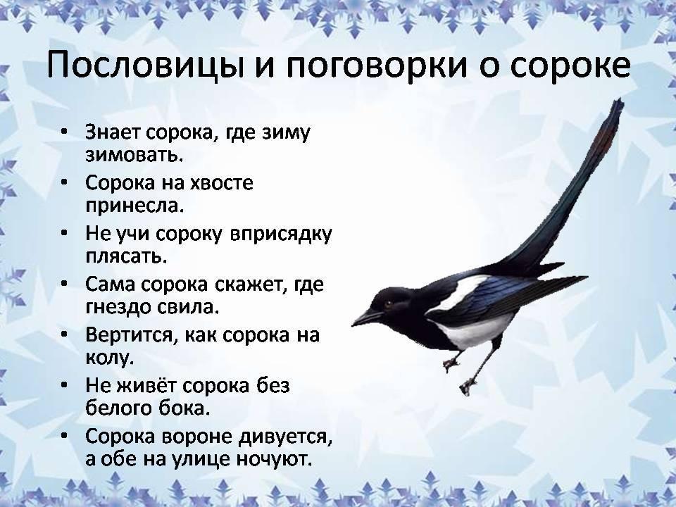 Приметы про ворон