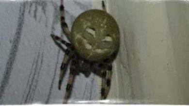 Что значит увидеть паука, если паук плетет паутину на окне – народные приметы