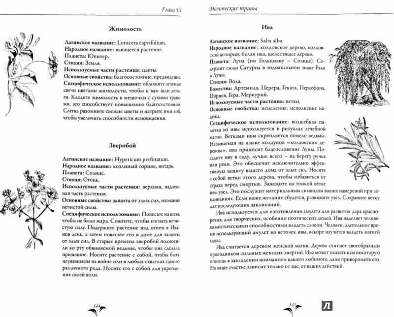 Магия трав (магические травы) | магия