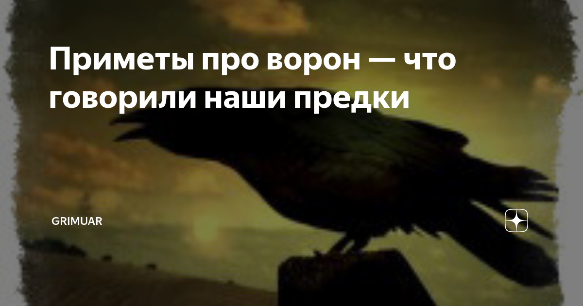 Приметы про ворон — древние загадки пернатых