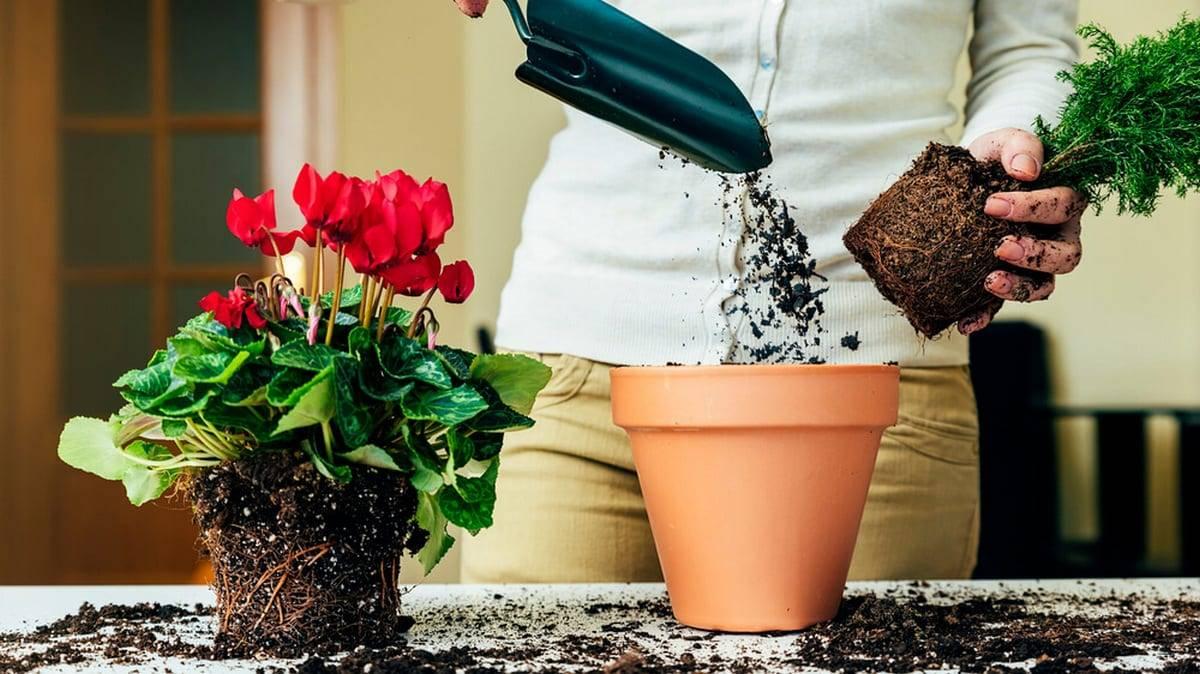Приметы об искусственных цветах - почему их нельзя ставить дома